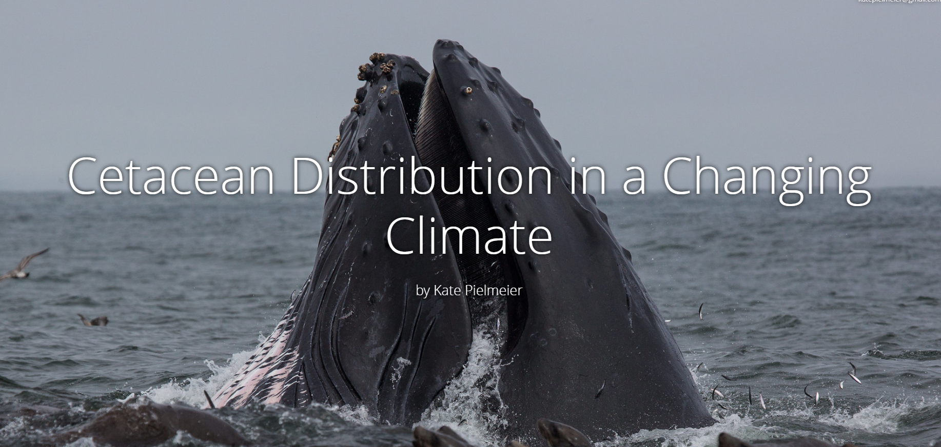 Cetacean Distribution in a Changing Climate