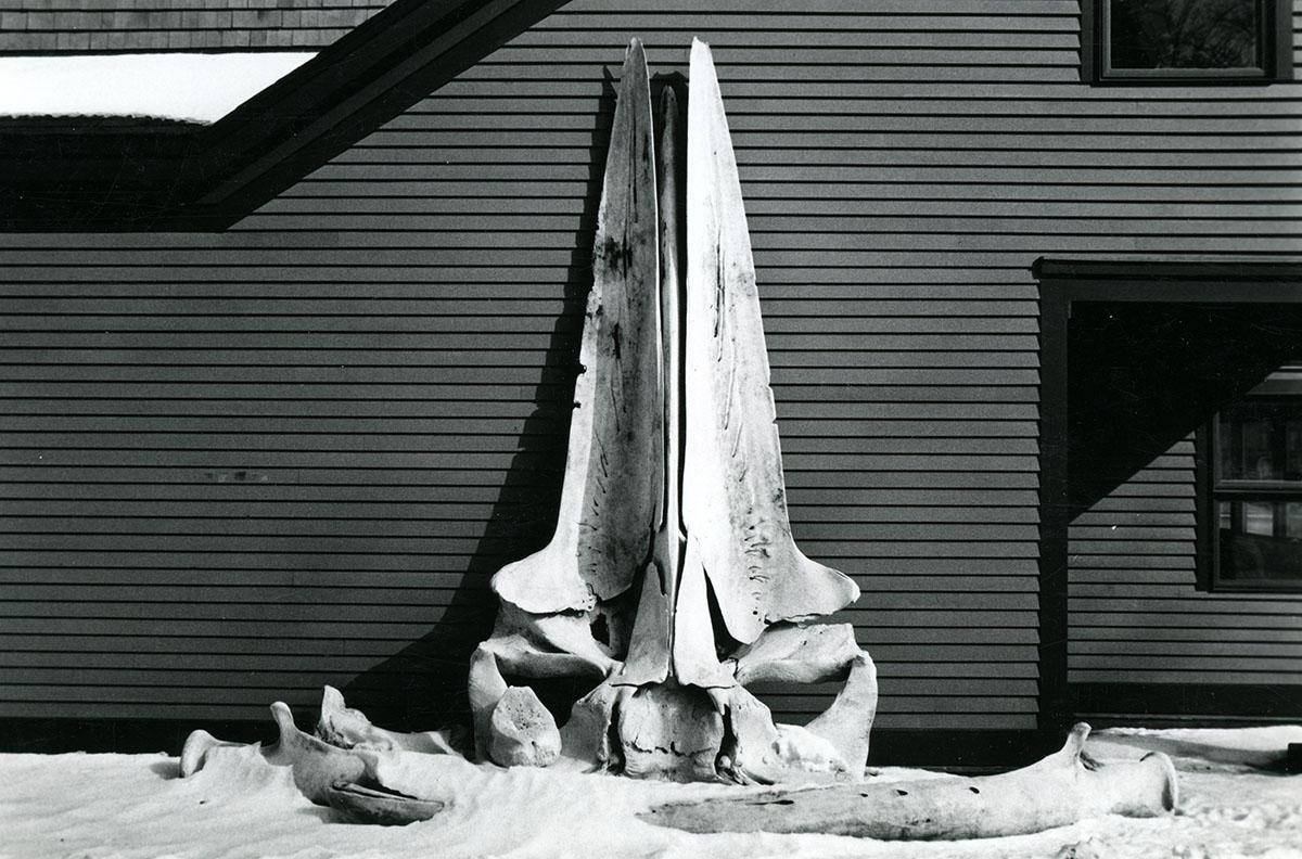 Whale Skull, photograph, late 1980s